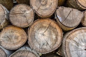 Fototapeten Brennholz-textur Wooden background, close up of cut tree trunk