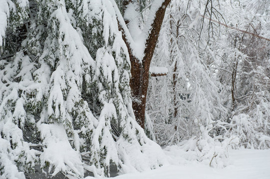 Snow storm blizzard buries northeast with several feet of snow cold weather winter landscape