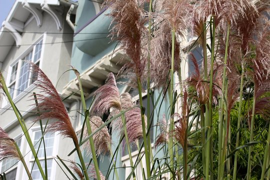Cat Tails in the Wind
