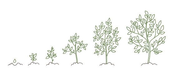 Trees, growth stages sketch. Animation progress. Plant development. Hand drawn vector line.