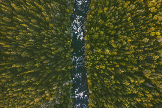 Aerial view coniferous forest and river landscape travel wilderness scenery in Finland scandinavian nature top down