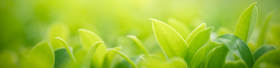 Closeup nature view of green leaf on blurred greenery background in garden with copy space for text using as background natural green plants landscape, ecology, fresh cover page concept.