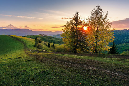 carpathian rural landscape at sunset in springtime. beautiful countryside with tree by the road. dirt pathway along the grassy rolling hills. distant ridge beneath a sky with clouds glowing before dus