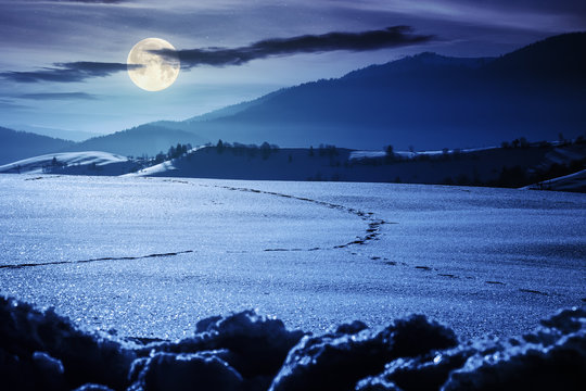 mountainous countryside in wintertime. trees on snow covered hills and meadows. wonderful weather on a bright night in full moon light. beautiful carpathian rural landscape.