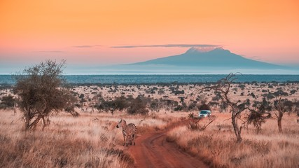 Wide shot of a beautiful jungle under the colorful sky captured in Tsavo west, Kilimanjaro, Kenya Wall mural