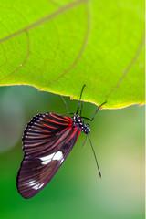 Foto auf Leinwand Schmetterling Closeup beautiful butterfly in a summer garden