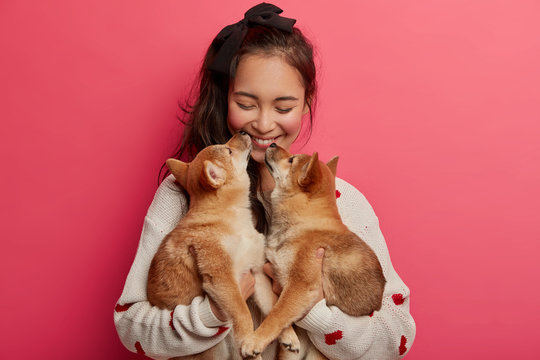 Love, tender, warm feeling and understanding without words. Cheerful korean woman receives kiss from two pedigree puppies, cannot imagine life without pets, has fun with animal best friends.