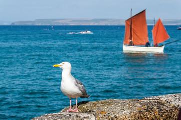Seagull ir sailing ship on Beautiful seaside