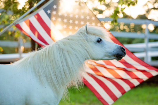Red White and Blue Pony