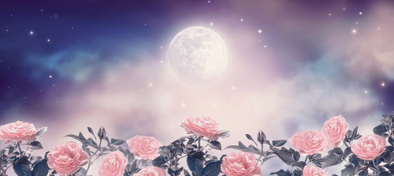 Fairytale fantasy photo background of magical deep blue dark night sky with shining stars, glowing full moon and beautiful fairy pink rose flower garden. Idyllic tranquil fabulous panoramic scene.