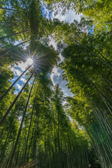 Deurstickers Bamboo Beautiful famous landmark green bamboo rainforest Bamboo Grove or Sagano Bamboo Forest is a natural forest of bamboo pathways in Arashiyama, Kyoto, Japan. idea for rest relax enjoy lifestyle