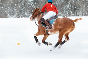 A horse polo player runs a gallop on a horse in an attack. On the feet of the horse special bandages to protect against hammer impact. Red ball on the snow field. Winter season games