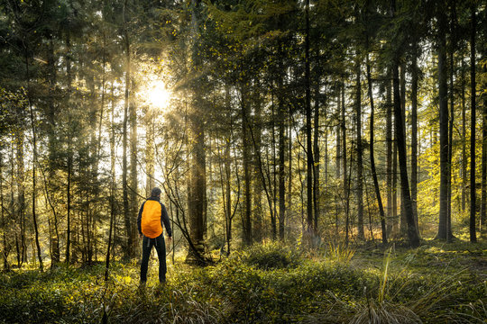 Sun is shining in forest with one man hiking a undiscovered trail