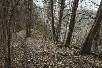 Steep forest path