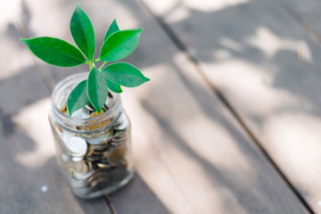 Acrylic Prints Plant Green plant on coin in glass jar with blur nature background. business financial banking saving concept. investment profit income. marketing startup success.