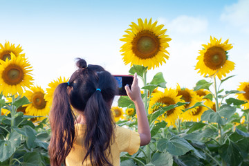 Little girl used mobile phone to take pictures of sunflower field.