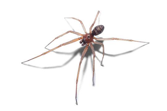 spider isolated on white background, macro photography