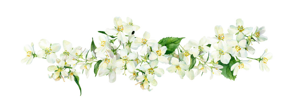 Watercolor composition of jasmine flowers