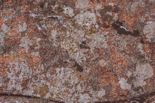 Surface of rock is covered with colorful lichen.