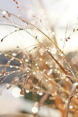 Herbstliche Gräser mit leuchtenden Wassertropfen im Gegenlicht