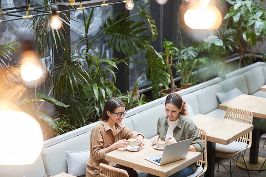 High angle portrait of two young women looking at laptop screen while enjoying coffee in outdoor cafe terrace decorated with plats, copy space