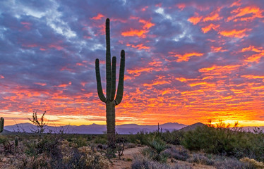Tuinposter Cactus Saguaro Cactus With Vibrant Desert Sunrise Background In Arizona
