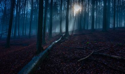 a beautiful sunrise in an old foggy forest
