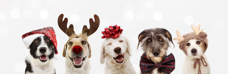 Fotobehang Hond Banner five dogs celebrating christmas holidays wearing a red santa claus hat, reindeer antlers and red present ribbon. Isolated on gray background