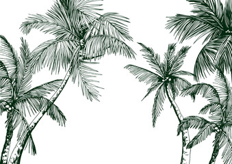 Tropical card with green palm trees. Hand drawn vector illustration. Wall mural