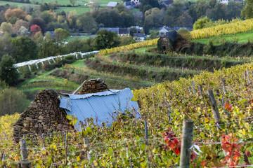Allassac (Corrèze, France) - Vignoble en automne  Wall mural