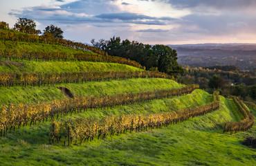 Allassac (Corrèze, France) - Vignoble de la Chartroulle