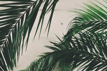 tropical palm leaves shot against a concrete wall inside of a botanical gardens