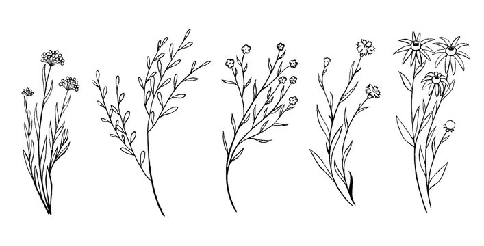 Vintage collection hand drawn vector illustration. Set of sketches field plants and flowers. Monochrome outline graphics isolated on white. Botanical elements for design, card, prints, cloth, poster.