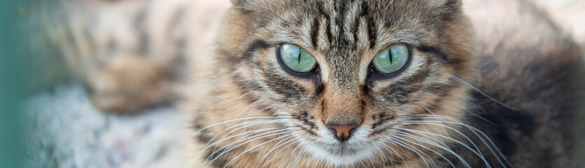 Fototapeta Beautiful homeless cat with green eyes. obraz