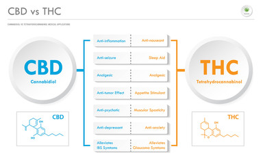 CBD vs THC Medical Applications horizontal business infographic illustration about cannabis as herbal alternative medicine and chemical therapy, healthcare and medical science vector.