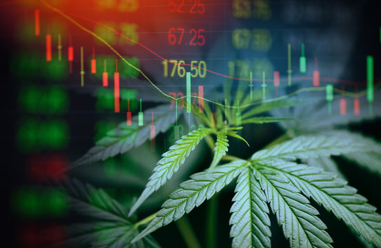 Business cannabis marijuana stock exchange market graph business - cannabis leaves on trading and investment of financial money price stock chart exchange growth and crisis money concept
