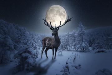 Poster de jardin Cerf Großer märchenhafter Hirsch steht in einer Winterlandschaft. Das Geweih hält einen großen Vollmond in einer Sternen Nacht
