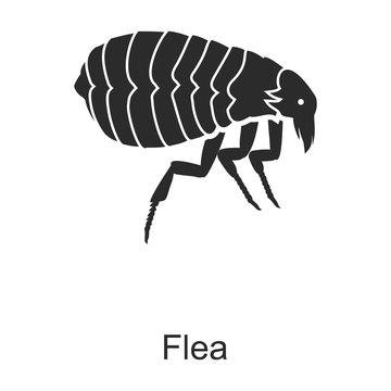 Insect flea vector icon.Black vector icon isolated on white background insect flea .