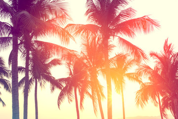 Türaufkleber Koralle coconut tree at tropical coast, made with Vintage tones, and purple sky at the sunset ,warm tones