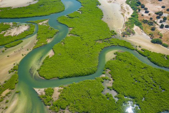 Aerial view of mangrove forest in the  Saloum Delta National Park, Joal Fadiout, Senegal. Photo made by drone from above. Africa Natural Landscape.