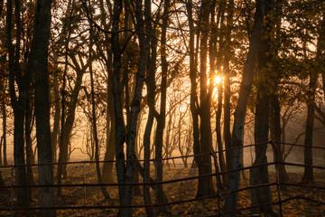Misty woodland at sunrise