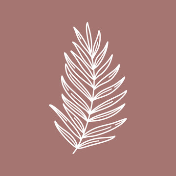 Branch with leaves of tropical plants. Outline Palm leaf In a Modern Minimalist Style. Vector Illustration.