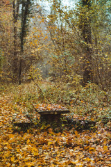 Sitzgruppe im Wald