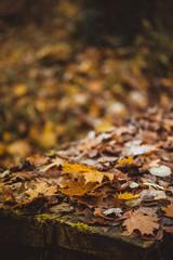 Brown-Herbstlaub auf einem Holztisch