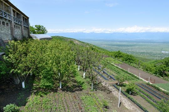 Farm with garden in territory of Saint Nino Bodbe Monastery near Sighnaghi, Georgia