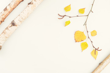 Composition on white background of birch wood with bark and birch branch with yellow leaves in autumn and copyspace top view flat Betula