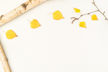 Composition Autumn on white background of birch wood with bark and birch branch with yellow leaves and copyspace top view flat Betula