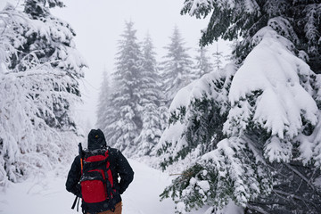 Fototapete - Hiker walking through a snow covered forest in winter