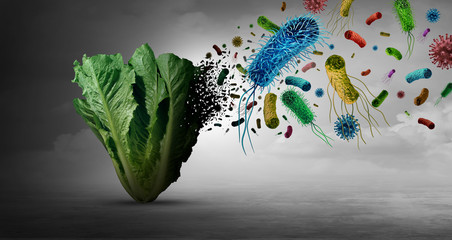Vegetable Bacteria Danger