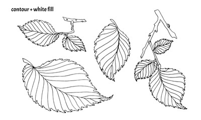 Set of hand drawn elm leaves in doodle style with black contour and white fill. Isolated nature vector illustration on white background
